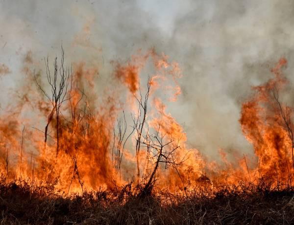 Más de 400.000 hectáreas afectadas por el fuego