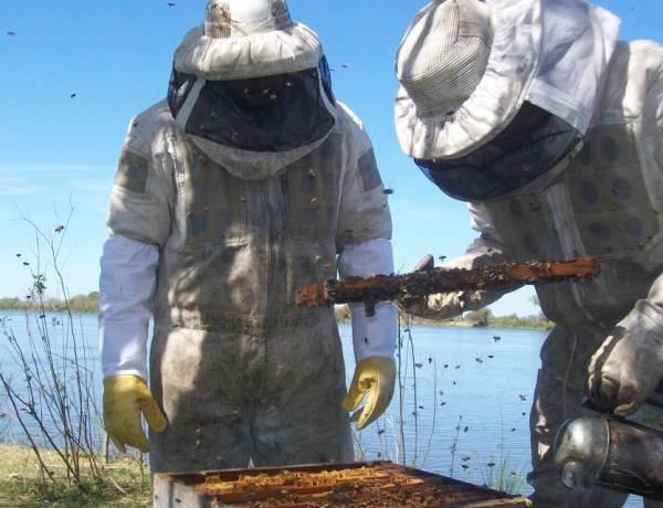 Santa Fe se consolida como la segunda provincia que más miel orgánica produce